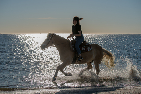 girl riding on haflinger horse in the sea