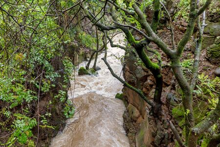 Banias river at north of Israel, flowing over rocks