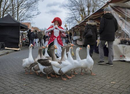 Pernis,Holland,14-12-2019:a female goose girl walks with a group of geese on the market during the dickens fair in Pernis, this is a anual event in december