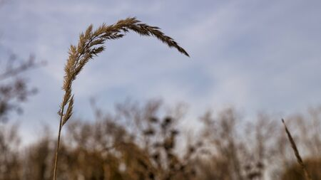 wheat in the field usable for condoleance card because it is a way of rest and sadness