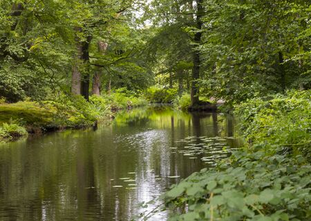 green forest in national park de veluwe in holland with pond and trees Banque d'images