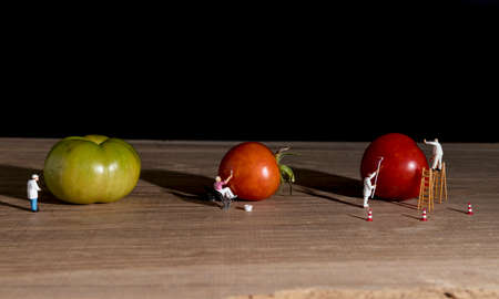 little world figures painting the green tomatoes red so they are ready to eat