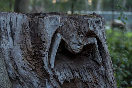 a bat cut into a tree trunk in the forest Banco de Imagens