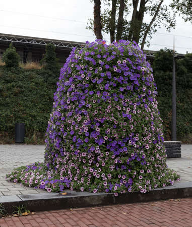 large street planter with purple and pink petunia flowers