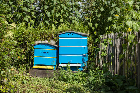 Traditional wooden hives for beeholding in a garden with plants and flowers special for the bees and insects