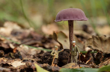 the forest rangers are talking under a mushroom in the forest, little figures from little world Banco de Imagens