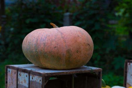 big pumpkin on a wooden box