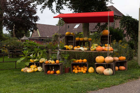 group of pumkins at the street