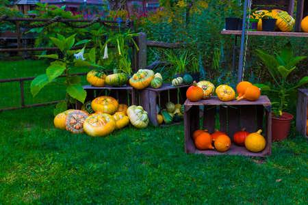 grouop of gourds or pumpkins Foto de archivo