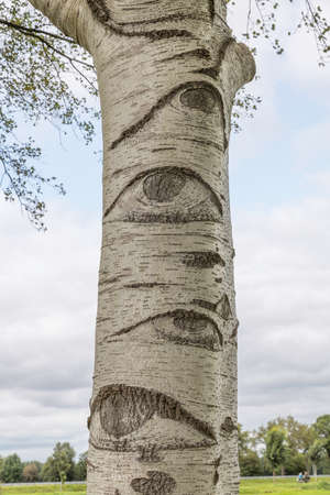 a white tree with eyes in the netherlands Foto de archivo