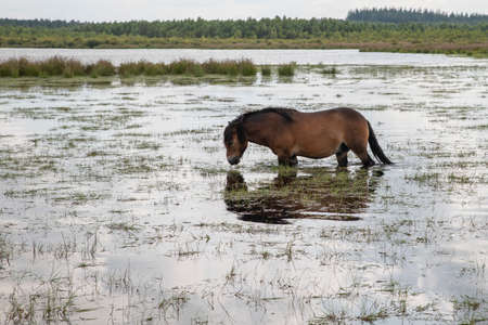 a horse in the water in holland