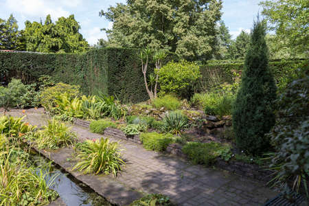 green garden with warer plants and trees