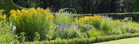 Beautiful wild flowers growing in a field Foto de archivo
