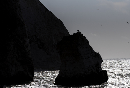 Dark cliffs, sea and birds
