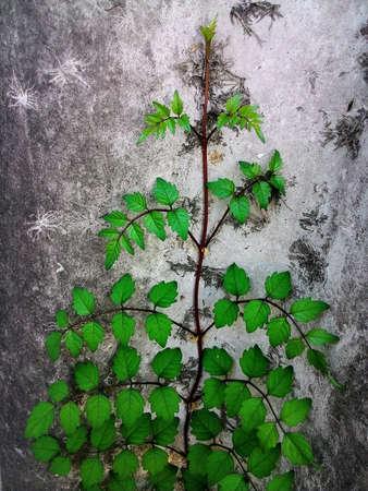 art: Leaves tree art on the wall