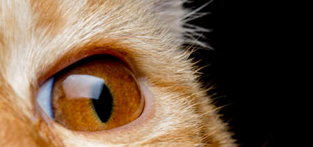 cat eye: The orange cats eye macro looking forward