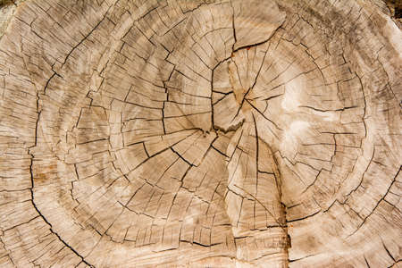 antique background: Wood texture background  Wood texture
