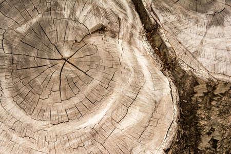 wood texture background: Wood texture background  Wood texture