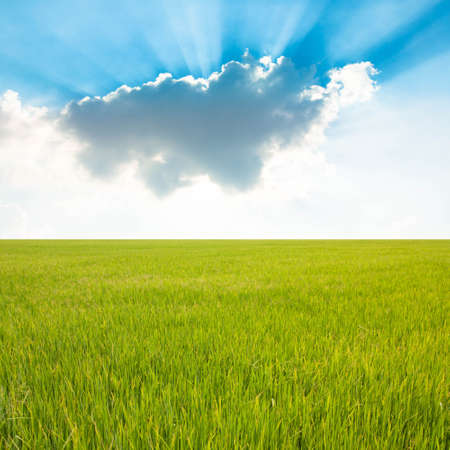 Rice field and blue sky with cloud photo