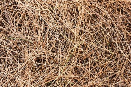 dried pine leaves