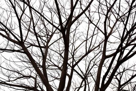 tree dead: Ramo di albero morto Archivio Fotografico