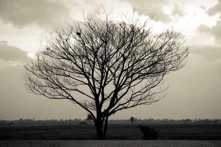 dead trees: Dram�tico cielo sobre el �rbol muerto solitario. Arte de la naturaleza. Foto de archivo