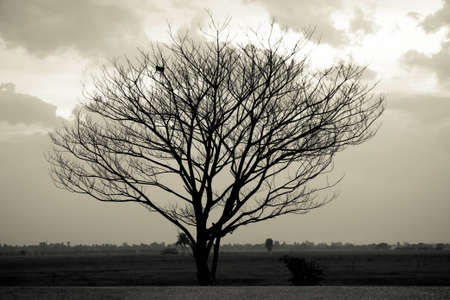 dead trees: Dramatic sky over lonely dead tree. Art nature.  Stock Photo