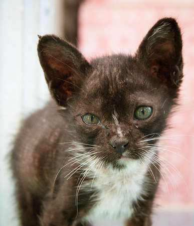 ragged: Ragged kittens