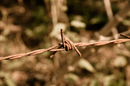 barbed wire fence: vintage barbed wire fence Stock Photo