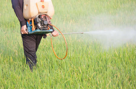 farmer spraying pesticide in the rice field photo