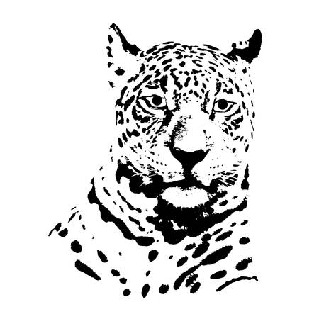 black and white panther: Jaguar head