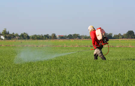 farmer spraying pesticide in the rice field 免版税图像 - 26723954