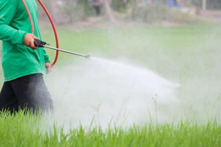 boer sproeien van pesticiden op het veld rijst