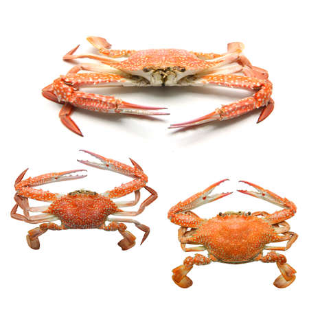 Steamed Blue Crab on white background photo