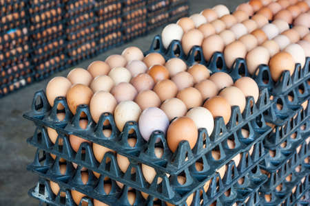 huevo: Los huevos de granja de pollos en el paquete