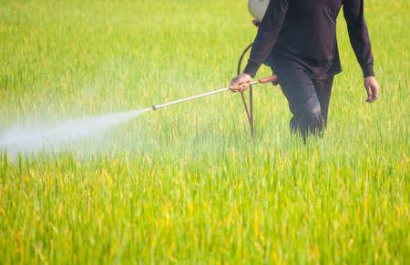 Landwirt Sprühen von Pestiziden im Reisfeld