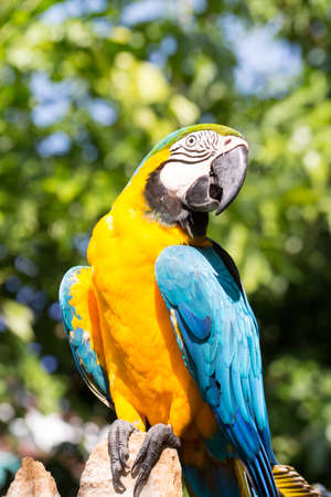 macaw: Colorful parrot, Macaw bird