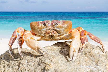 crab legs: Crab on Tachai island, Phangnga Province, Thailand