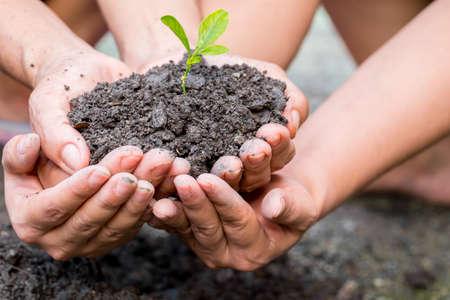 crecimiento planta: manos ahuecadas que sostienen una planta verde