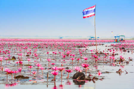 unseen: Sea of pink lotus, Nonghan, Udonthani, Thailand, Unseen in Thailand