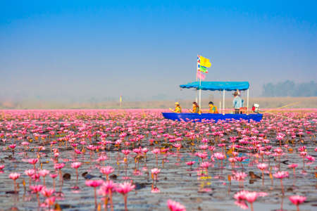 unseen: Red lotus, Nonghan, Udonthani, Thailand, Unseen in Thailand