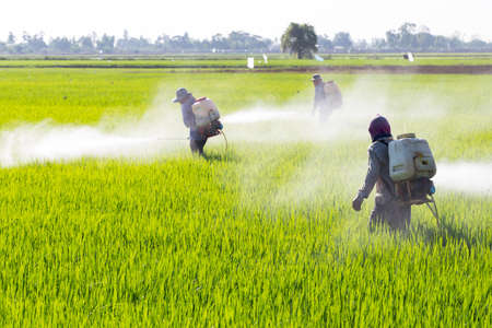 pollutant: farmer spraying pesticide in the rice field