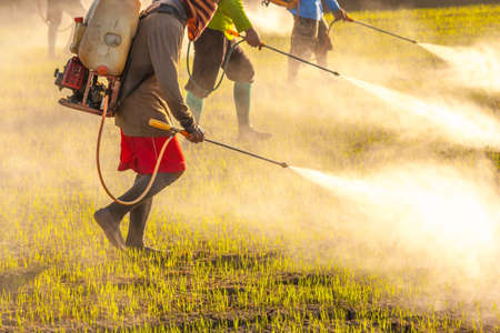 agribusiness: farmer spraying pesticide in the rice field, vintage color style Stock Photo