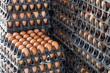 Egg panels arranged on a chicken farm