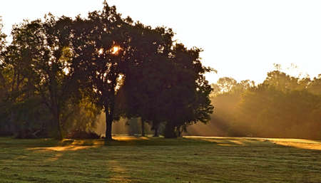 Morning sunbeams shining from behind a tree at the park