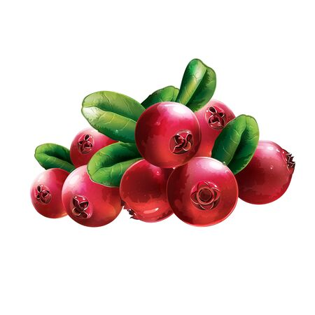 foxberry: Red Cranberries With Leaves