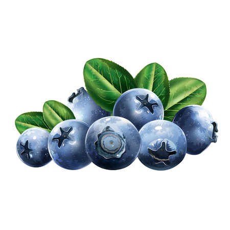Tasty blueberries with leaves. For products and packaging.