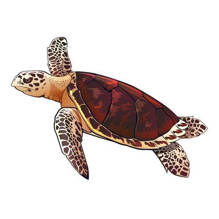 Zeeschildpad vector illustratie op een witte achtergrond