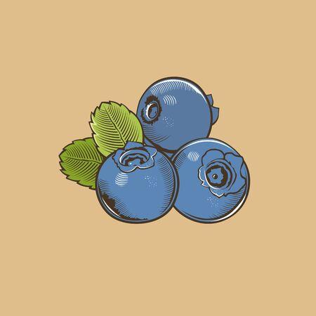 Myrtille dans le style vintage. Colored illustration vectorielle.