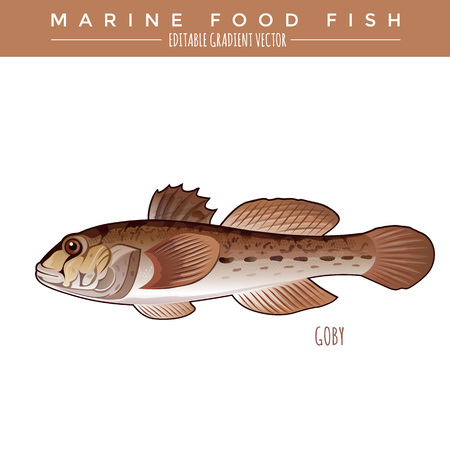 goby: Goby illustration. Marine food fish, editable gradient vector.
